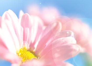 乳がんを乗り越えて――信仰を持つ仲間の愛に感謝